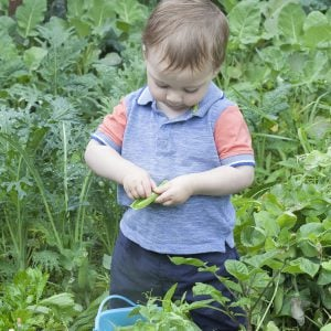 Summer Produce Guide: Baby Led Weaning